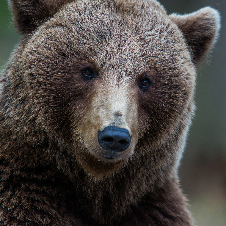1500_bear.jpg