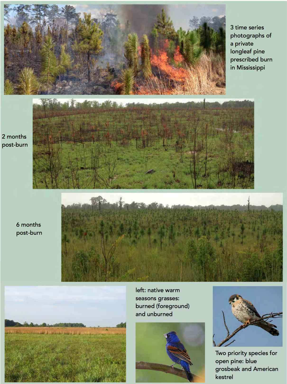 A Burning Issue: Prescribed Fire and Fire-adapted Habitats of the East Gulf Coastal Plain