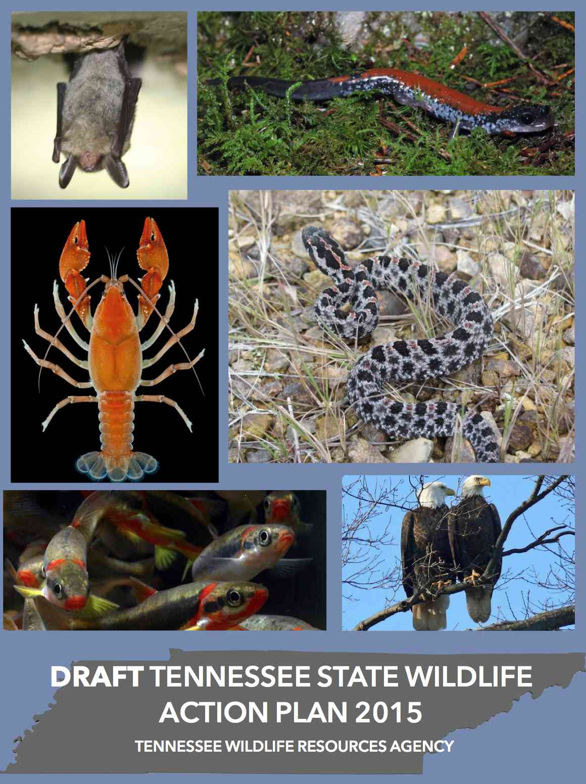 Tennessee 2015 State Wildlife Action Plan