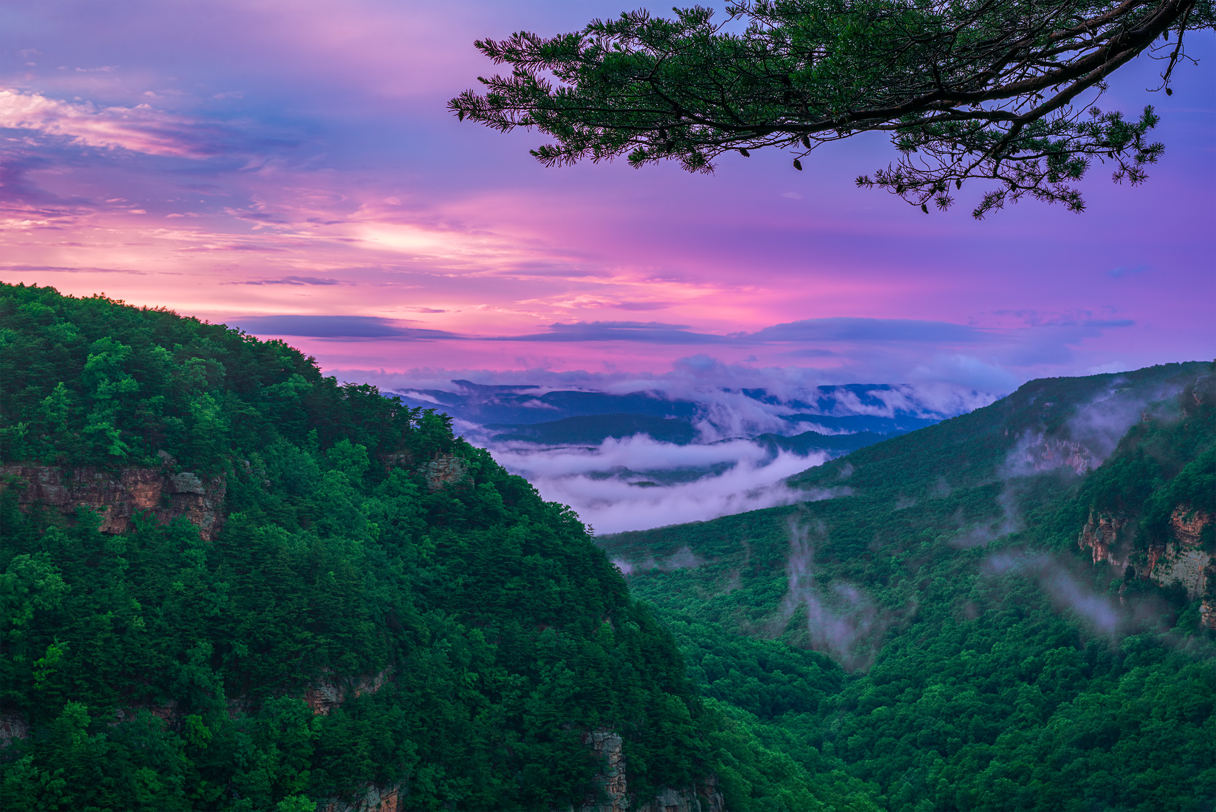 Cloudland Canyon - Took this in a storm with the sun setting, in a brief period when it stopped raining, turning the sky pink and lighting the whole area in a pinky glow.