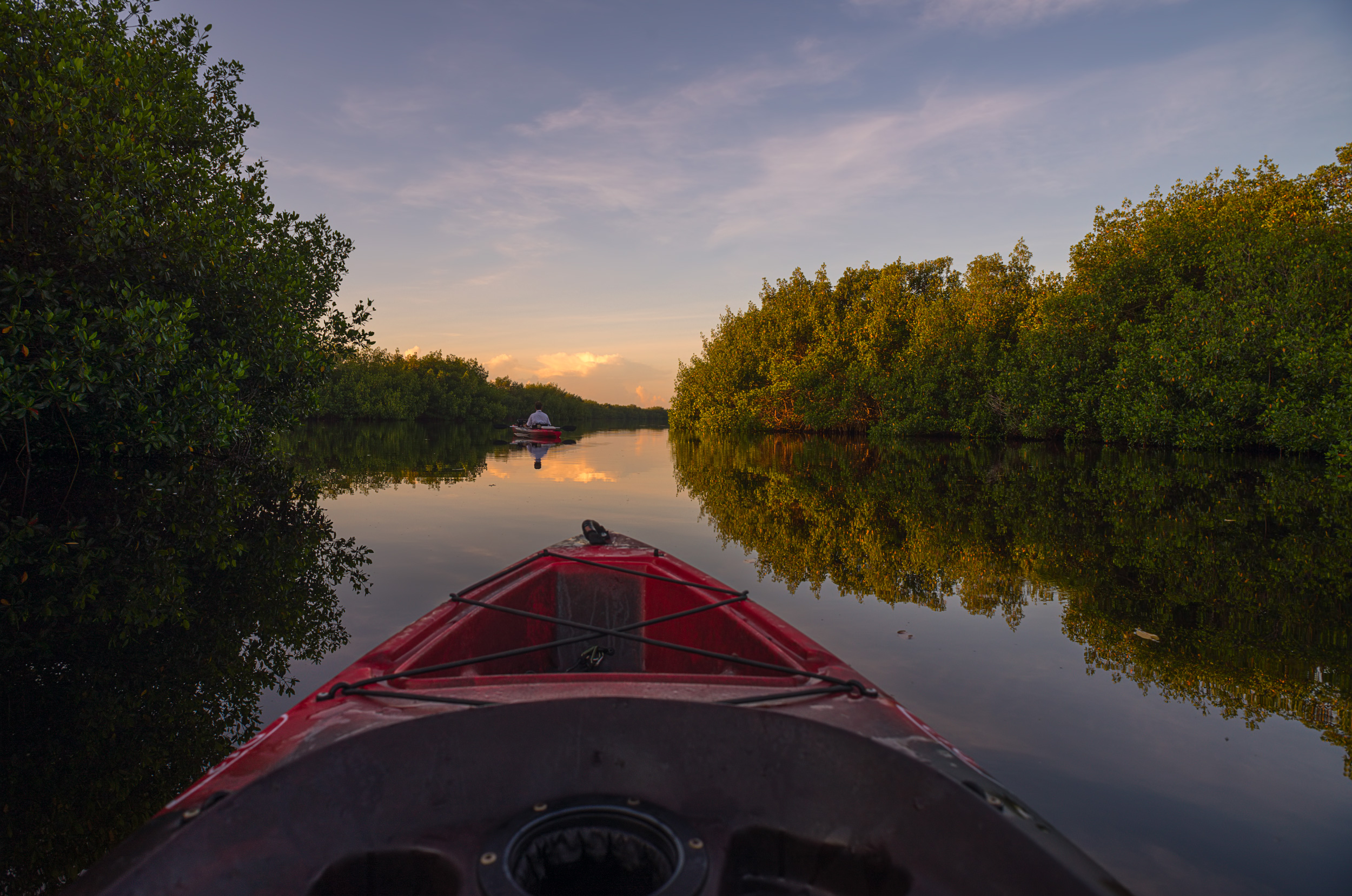 Kayaking Through The Mangrove Forest -Kayaking through the mangrove forest at Fakahatchee Strand Preserve State Park in the Everglades.