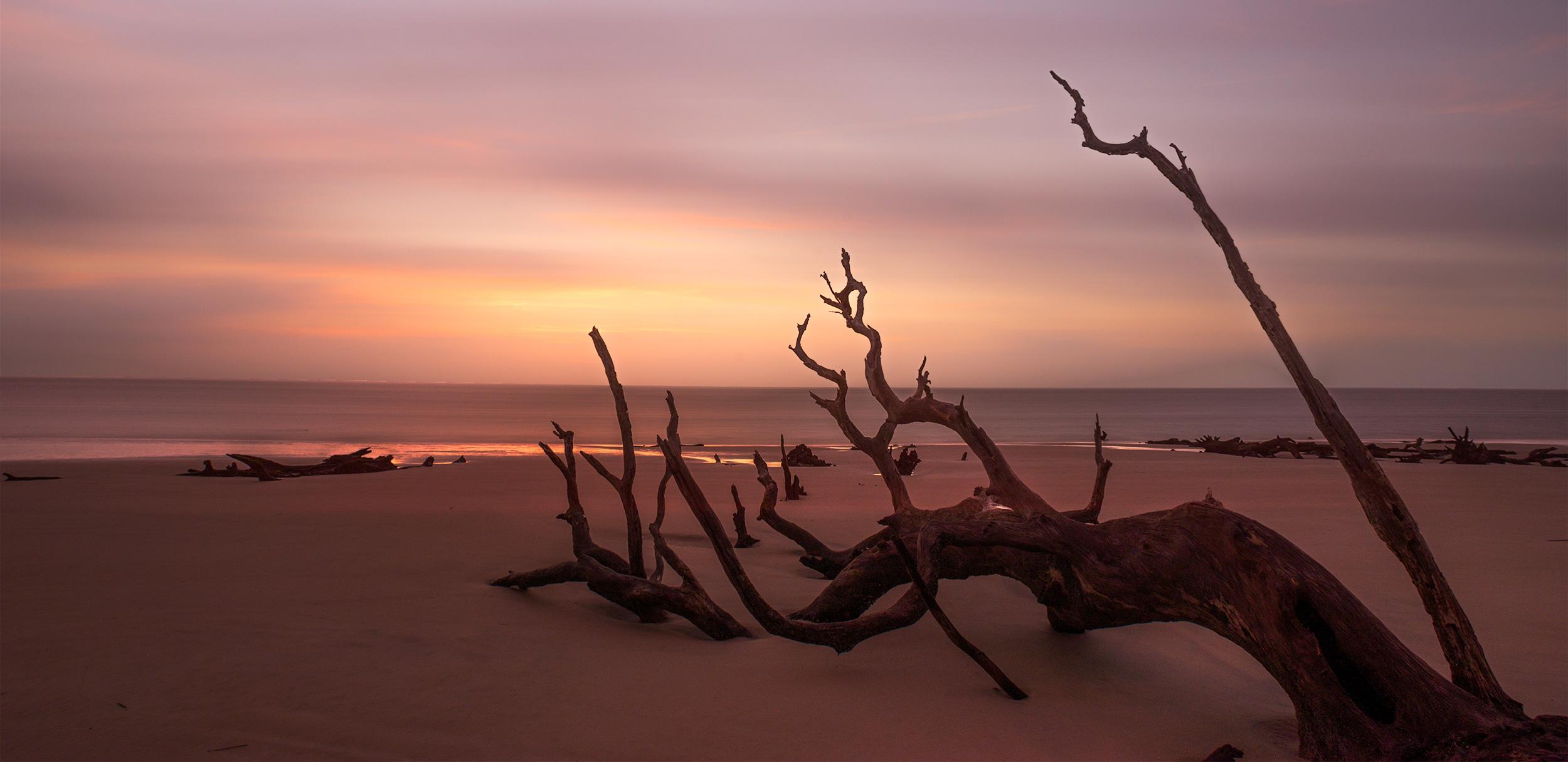 Long exposure sunrise at Driftwood Beach, Jekyll Island.