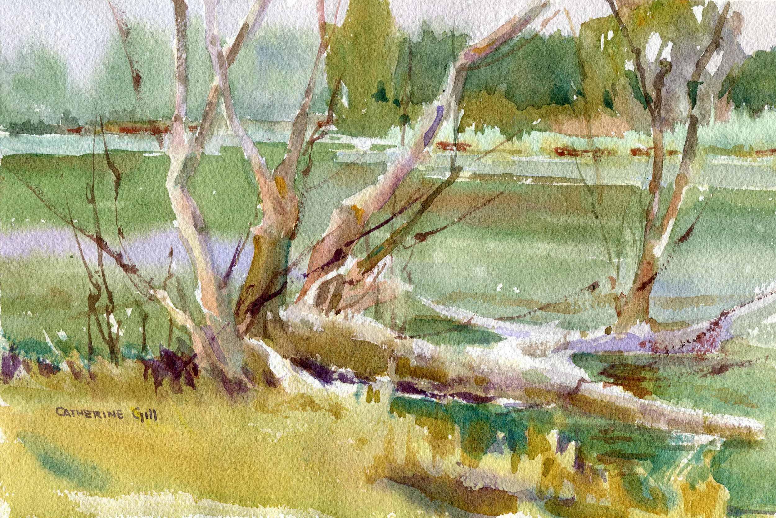 Arboretum203.jpg