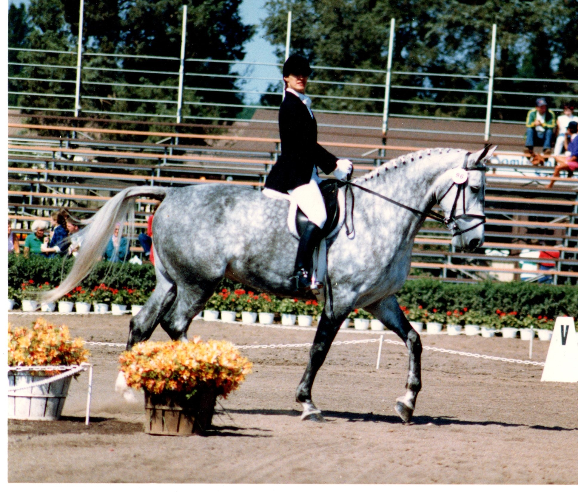 dressage show in VA with my horse Vera