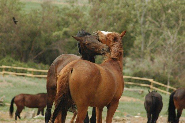 Sundance Ranch Soulful Entrepreneur Retreat Equine
