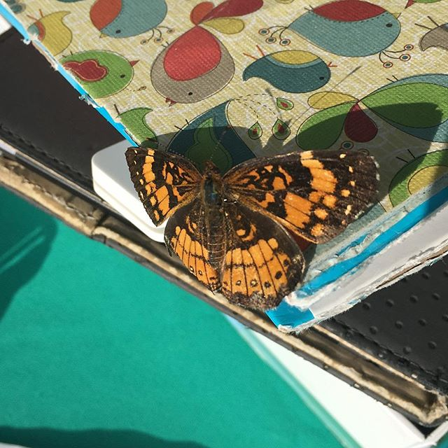 Fly on over to the Arlington Farmers Market! @arlfoodworks @communityfoodworks #farmersmarketweek #eatclean #supportlocal #eathealthy #farmers #butterfly #love #goodluck🍀