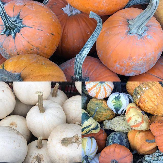 Fall is here.. @garnersproduce