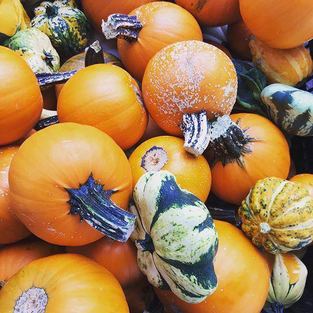 Fall is almost here! Stop by the market today to get your fix of pumpkins, winter squash, apples, pet treats, and more! **Unfortunately, @get_manaeesh and @chilangafoods will not be at the market today. . . . @communityfoodworks  @tysonspartnership #farmersmarket #vafarmersmarket #shoptysons #supportlocal #shoplocal #mcleanva