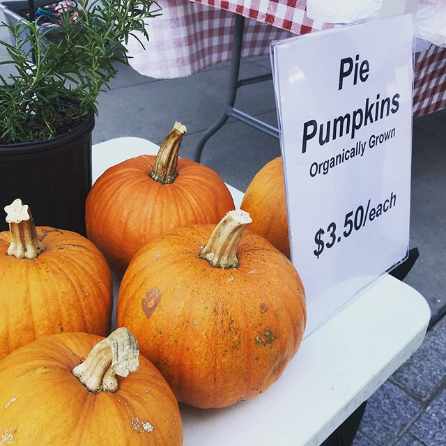 Pumpkins are starting to make an appearance at the market! Stop by and get your favorite fall goodies - we're open from 10-2 on the Plaza . . . @communityfoodworks @shoptysons @tysonspartnership #farmersmarket #vafarmersmarket #shoptysons #shoplocal #supportlocal #fall #pumpkin #mcleanva
