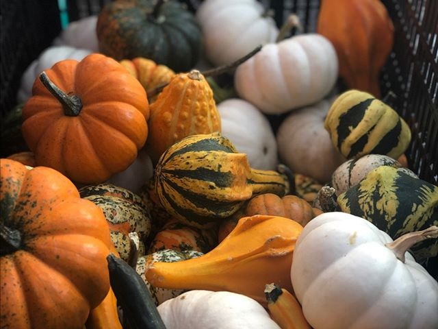YOUR WEEKLY MARKET NEWS! 🎃🍐🍆 Join us at market for some fall favorites - pumpkins, apple cider, & more! It's never to soon to start holiday shopping -- EthanAdeline will be back at market tomorrow with her beautiful handmade jewelry! Enjoy some music by Joe Reiman Musican Music while you shop.  Check out our weekly newsletter to learn more!  #buyfreshbuylocal #vagrown #localfarmer #summerproduce #farmersmarket #eatlocal #belocal #shoplocal #buylocal #supportlocal #farmfresh #nova #farmersmarket #farmer #organic @communityfoodworks