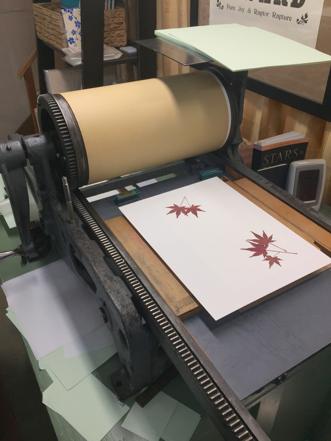 "This is my very first printing press, a Poco ""0"" made in Chicago around 1910 and designed to proof newspaper texts and images. It's a perfect little press for nature printing. When I had the leaves where I wanted on the book page, I placed an over sheet over the leaves and rolled everything under the cylinder."