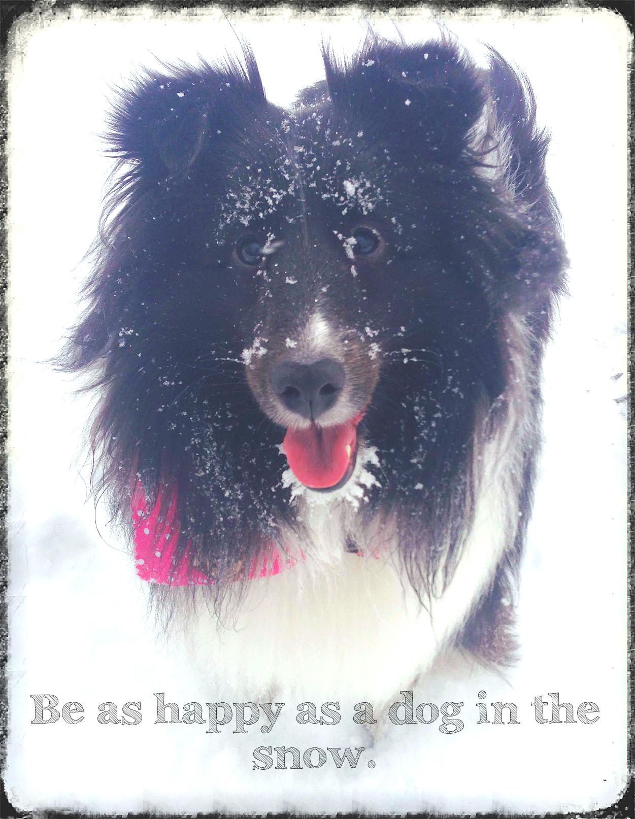 Sophie the Snow Dog