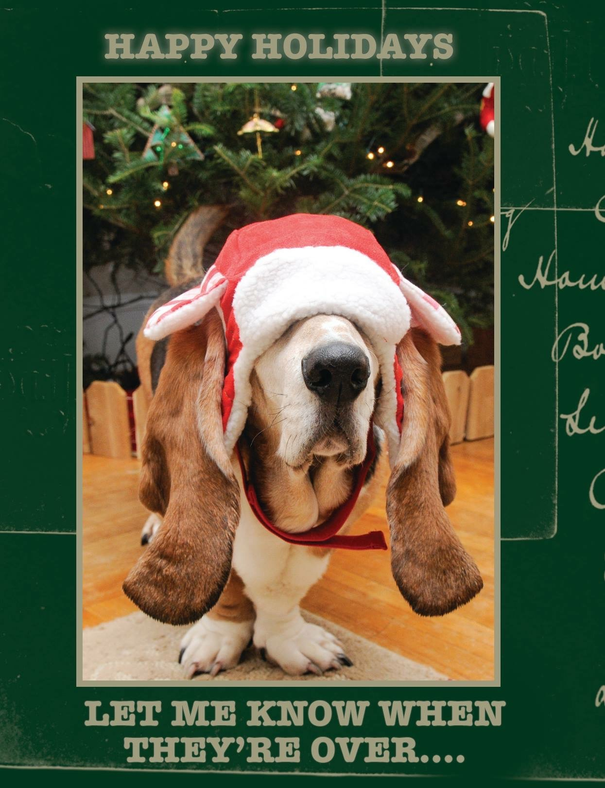 Rooney is a BIG fan of the holidays. Especially my annual holiday card.