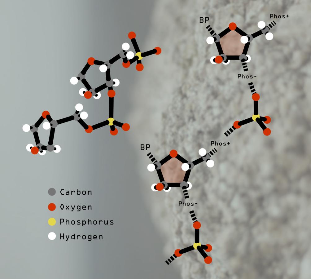 PhosphateBackbone.png