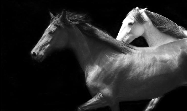 caballos2.png