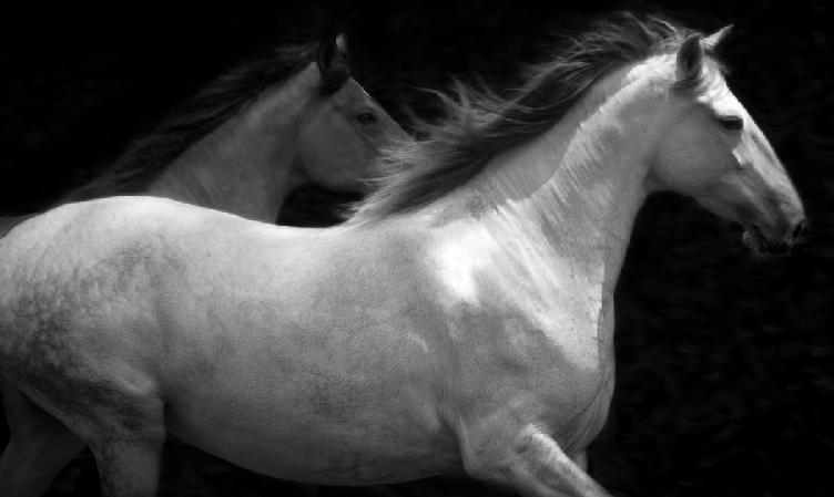 caballos6.png