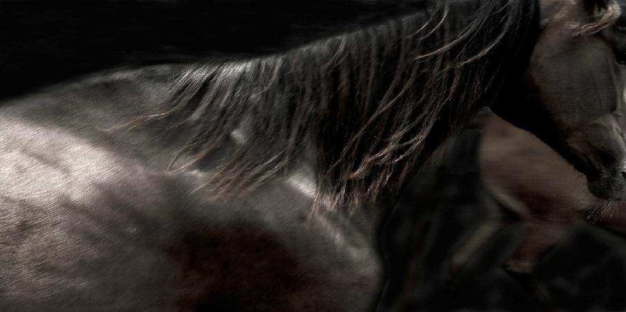caballos4.png
