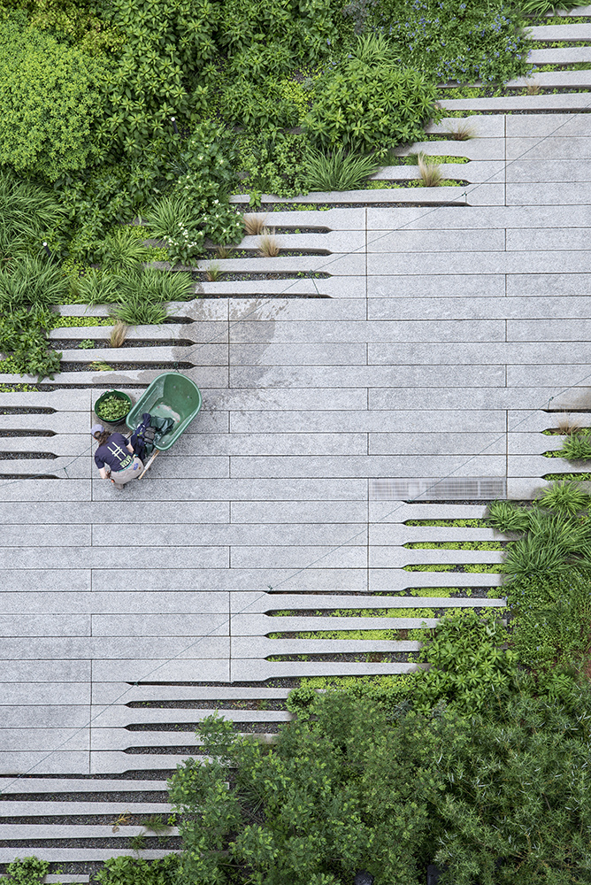 The High Line in NYC (Timothy Schenck)