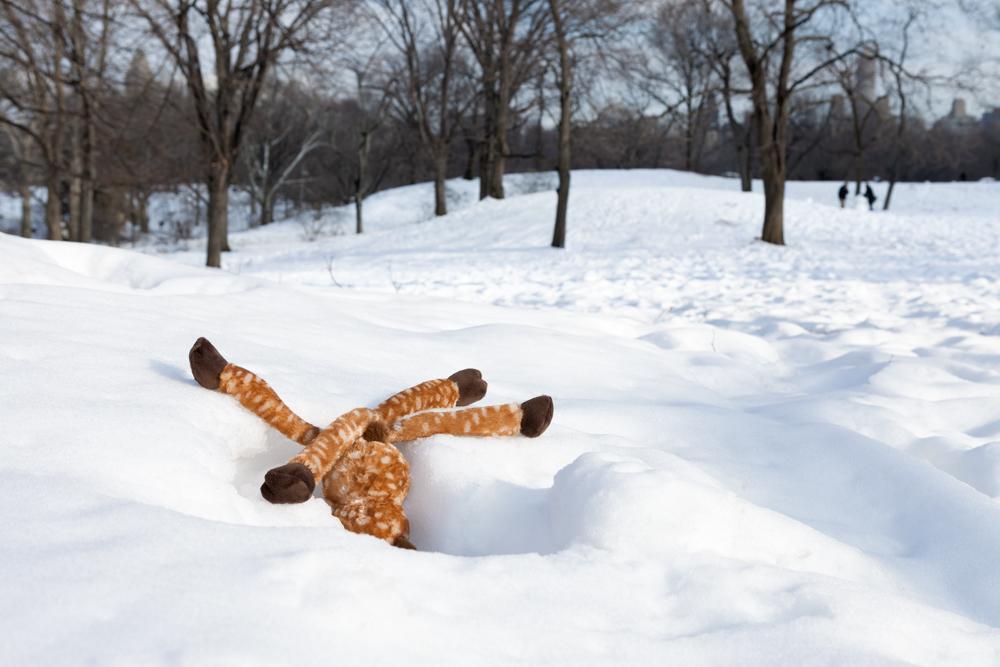Morbidity & Mortality: Deer
