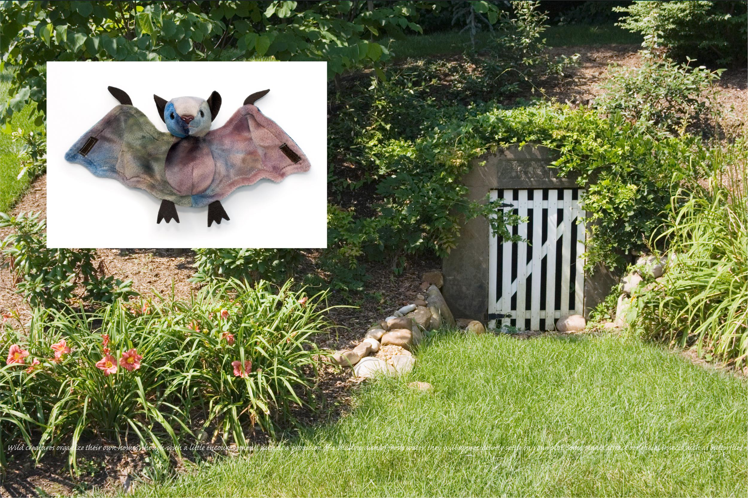 Flora & Fauna: Bat
