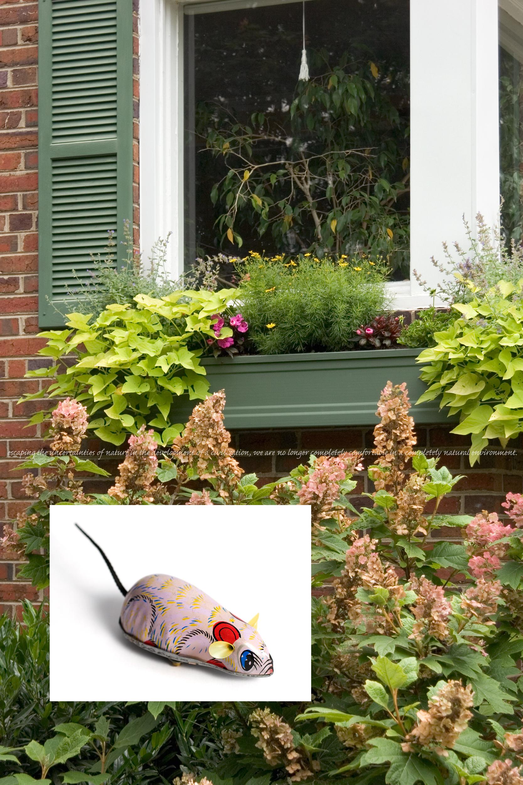 Flora & Fauna: Mouse