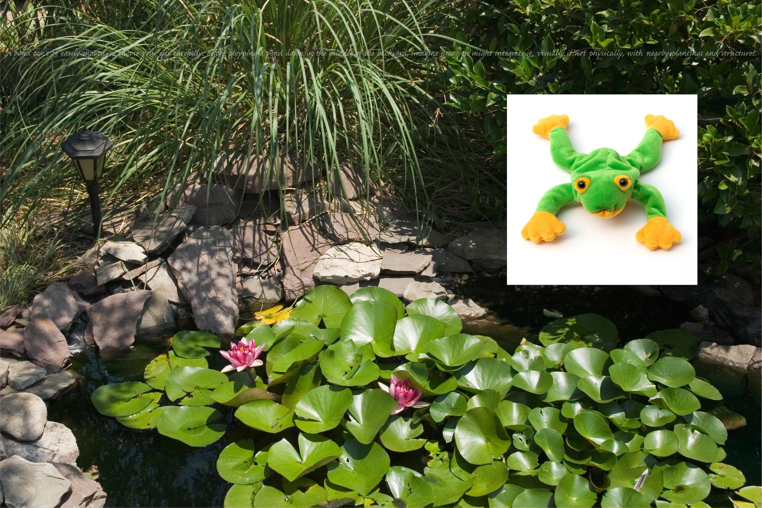 Flora & Fauna: Frog
