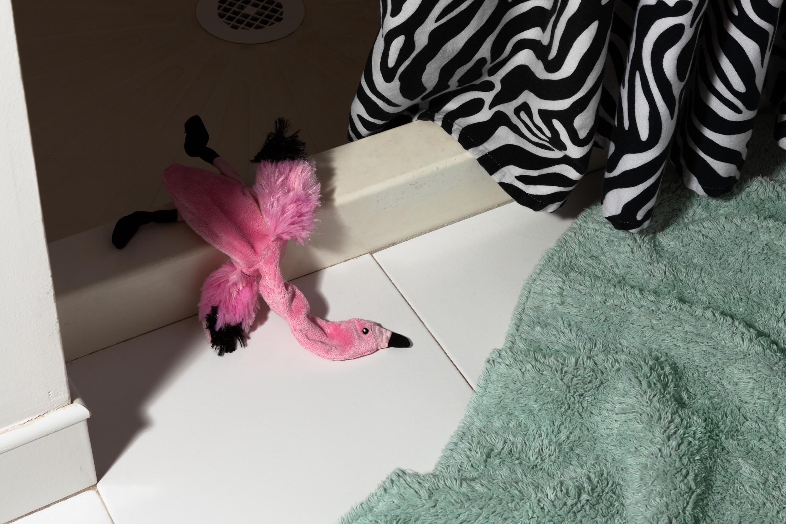 Morbidity & Mortality: Flamingo