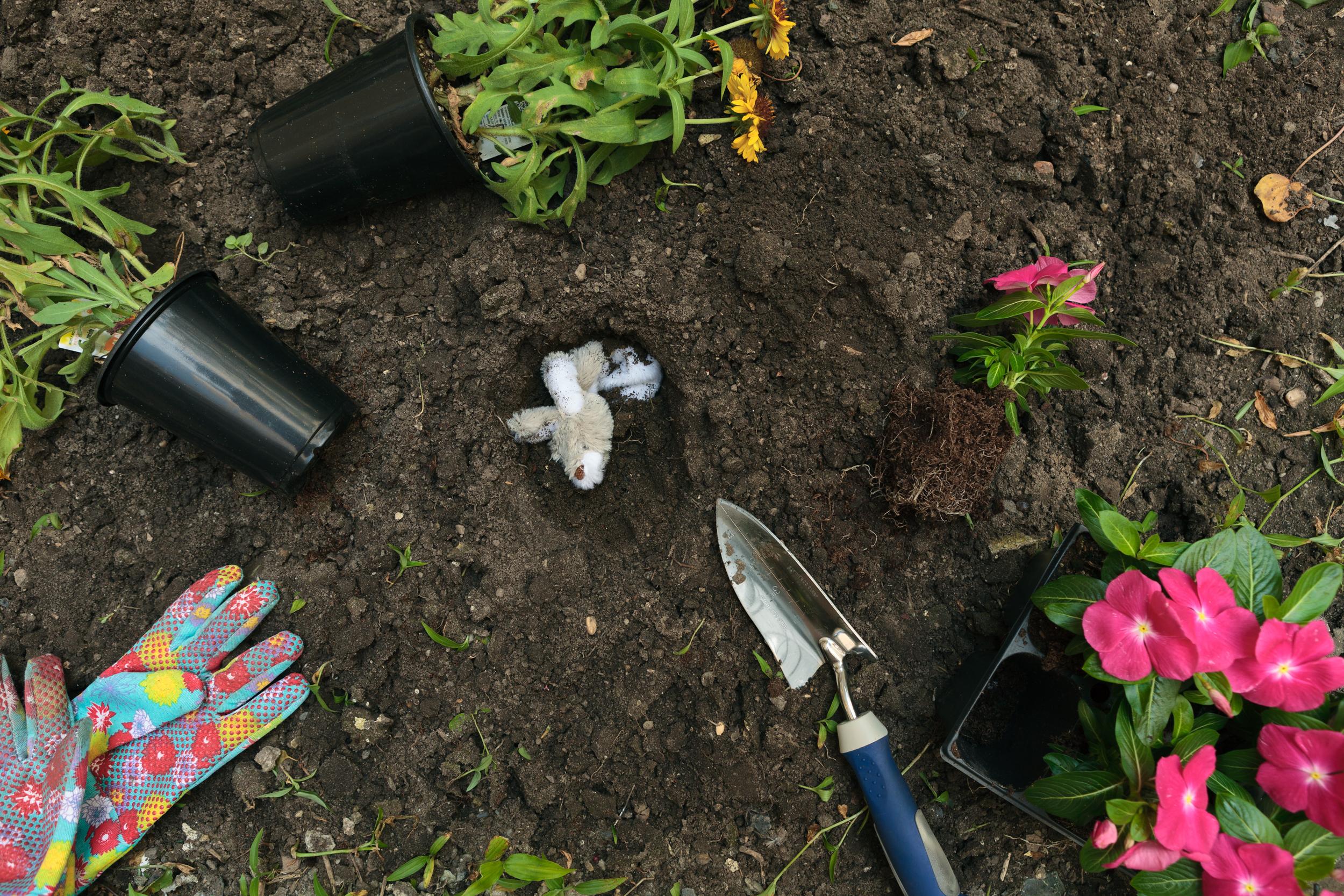 Morbidity & Mortality: Hare