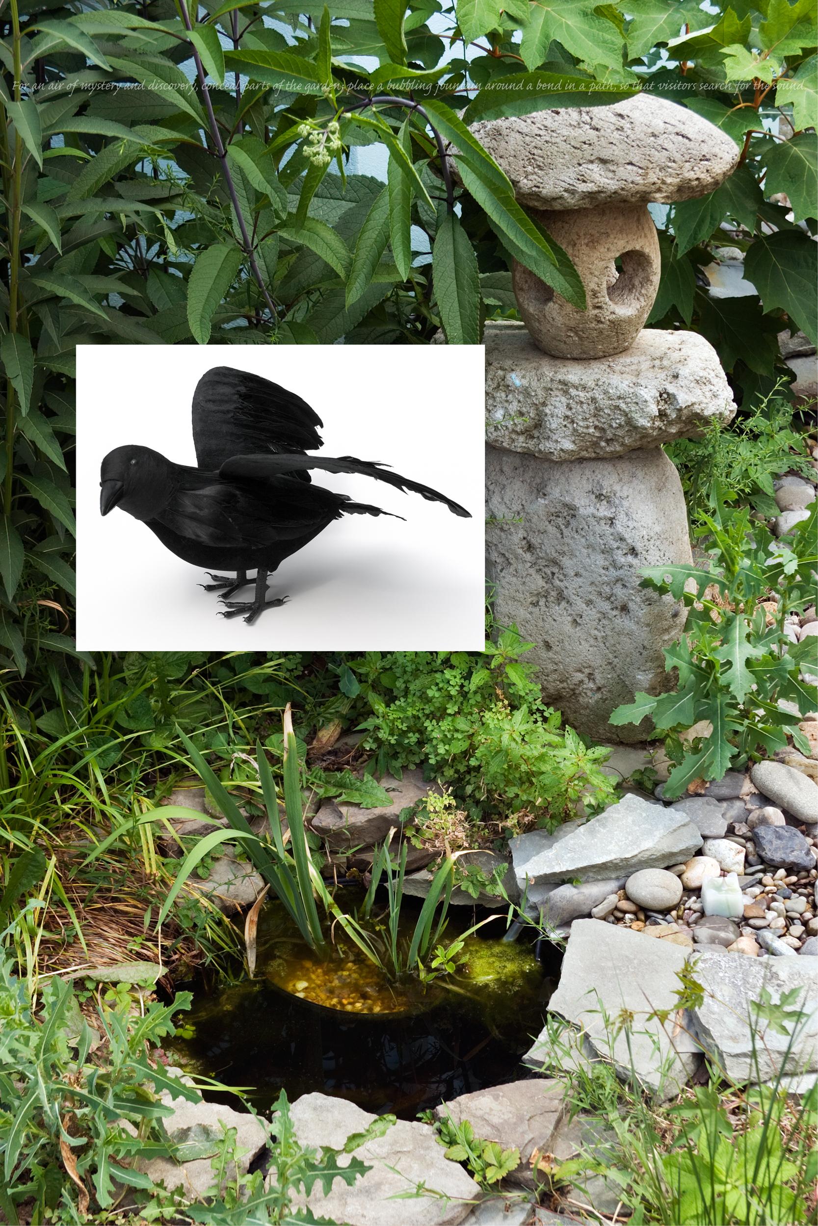 Flora & Fauna: Crow, 2007