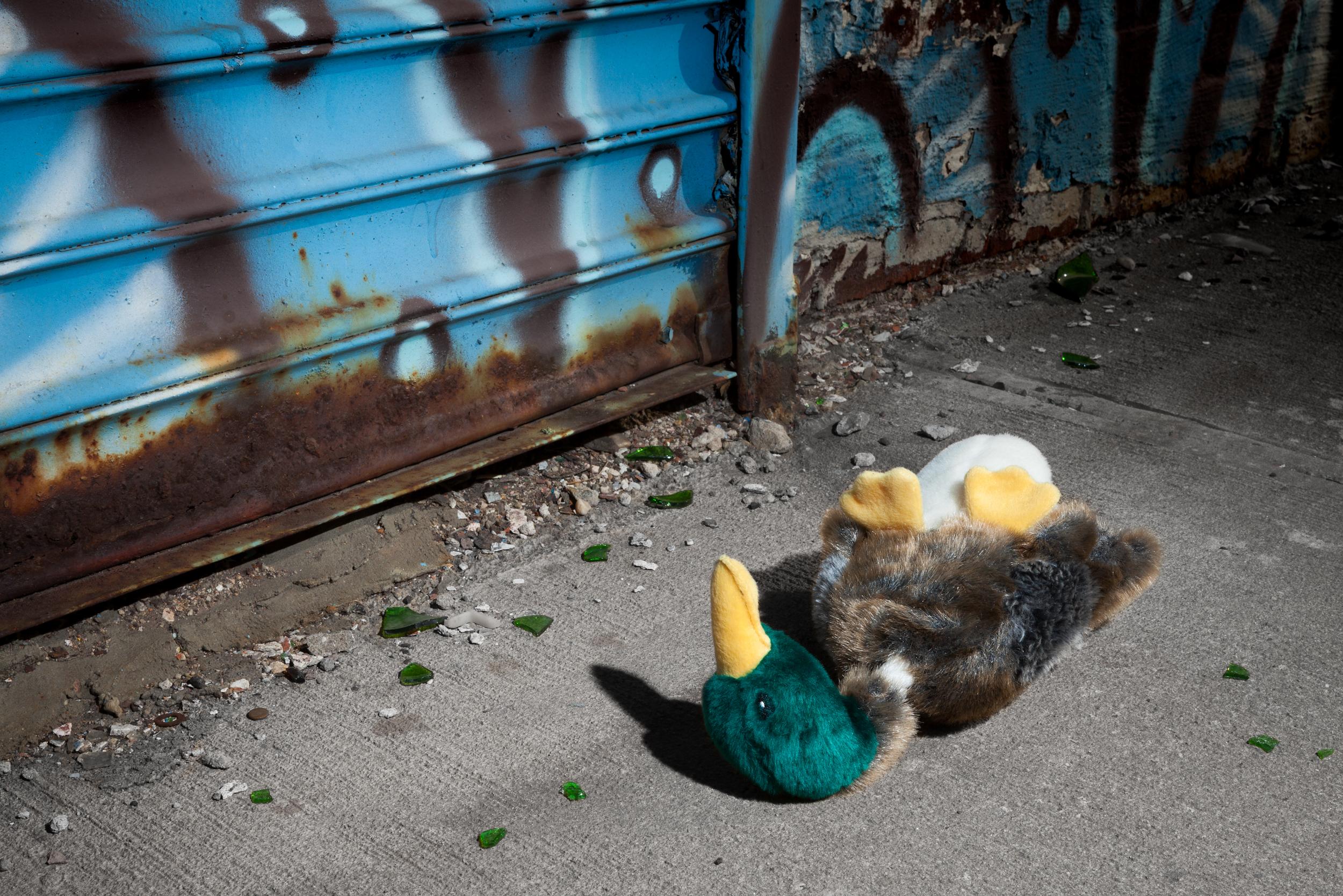 Morbidity & Mortality: Duck