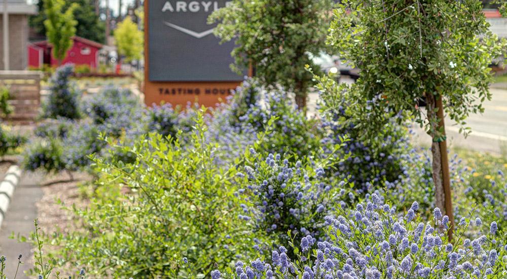 The Argyle Garden