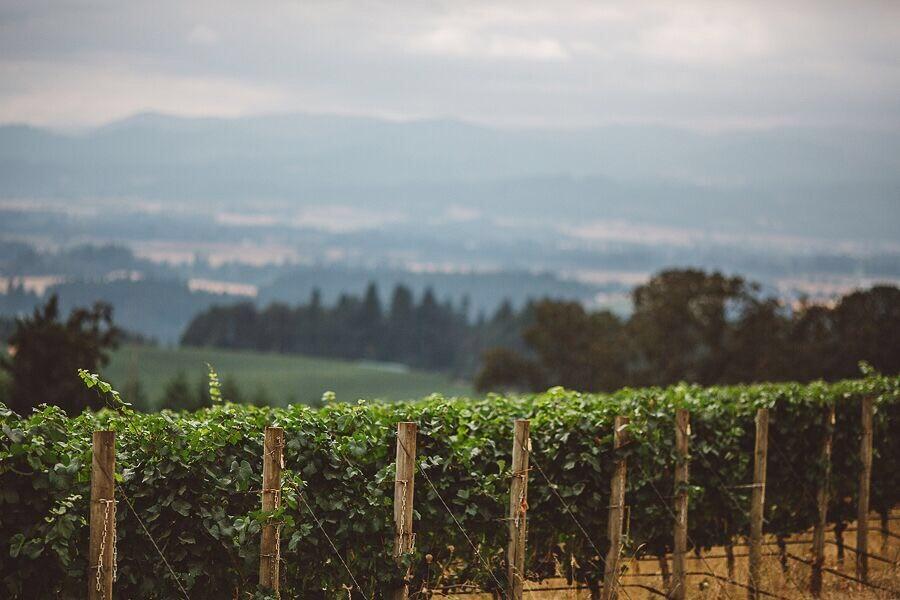 vineyard'.jpg