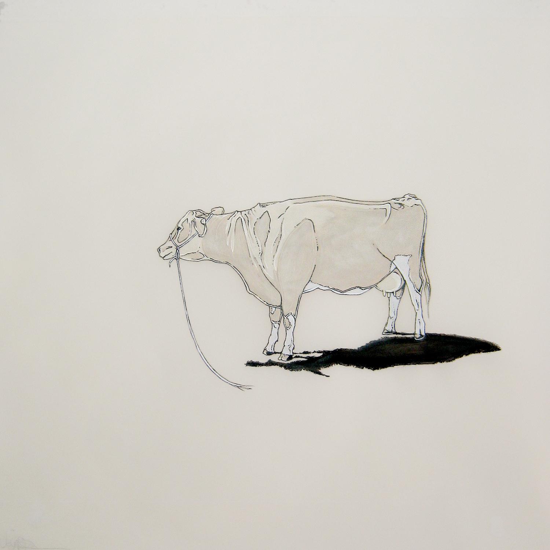 vaca perdida , 2012