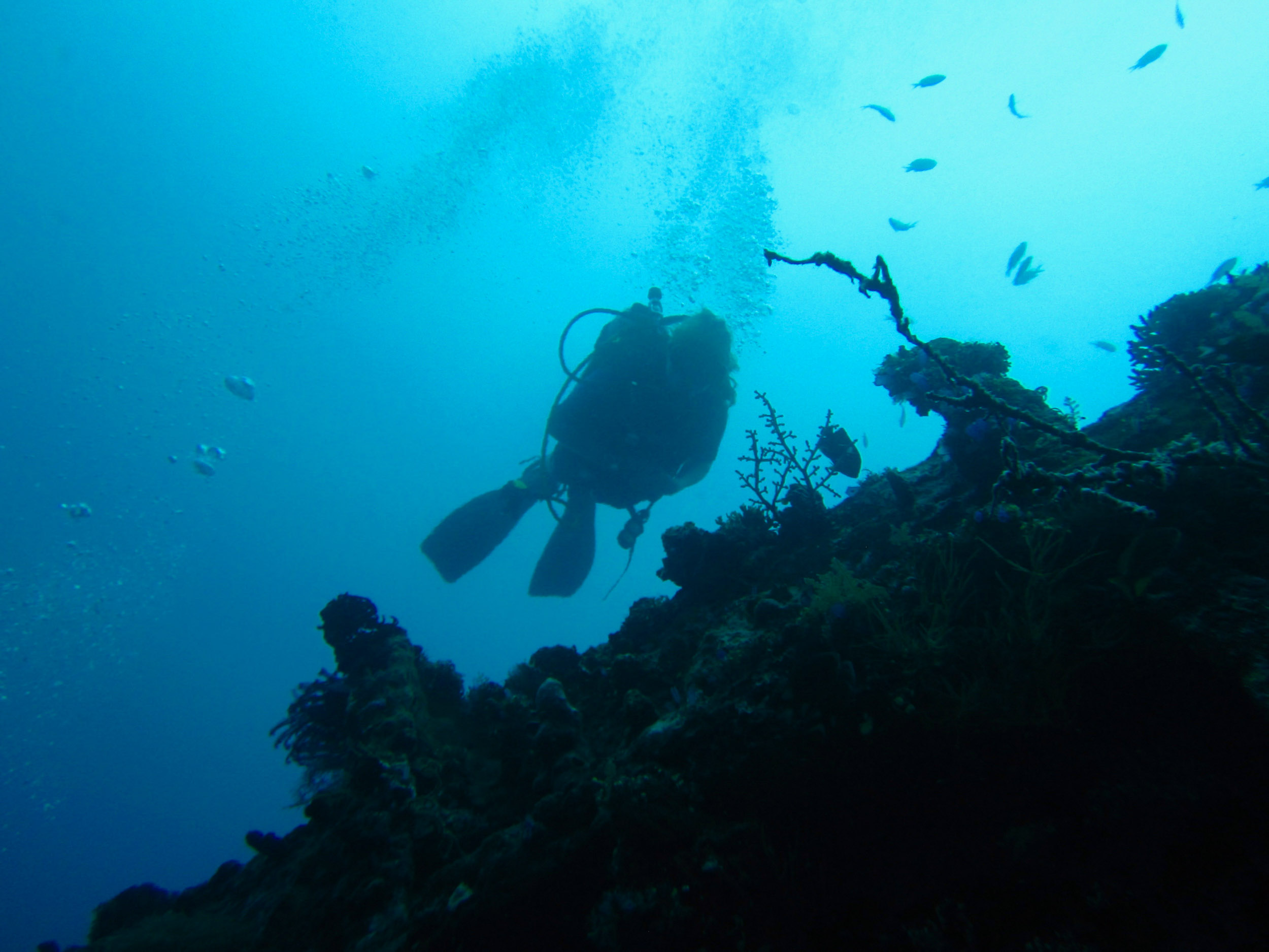 Woman scuba diving, Indonesia.