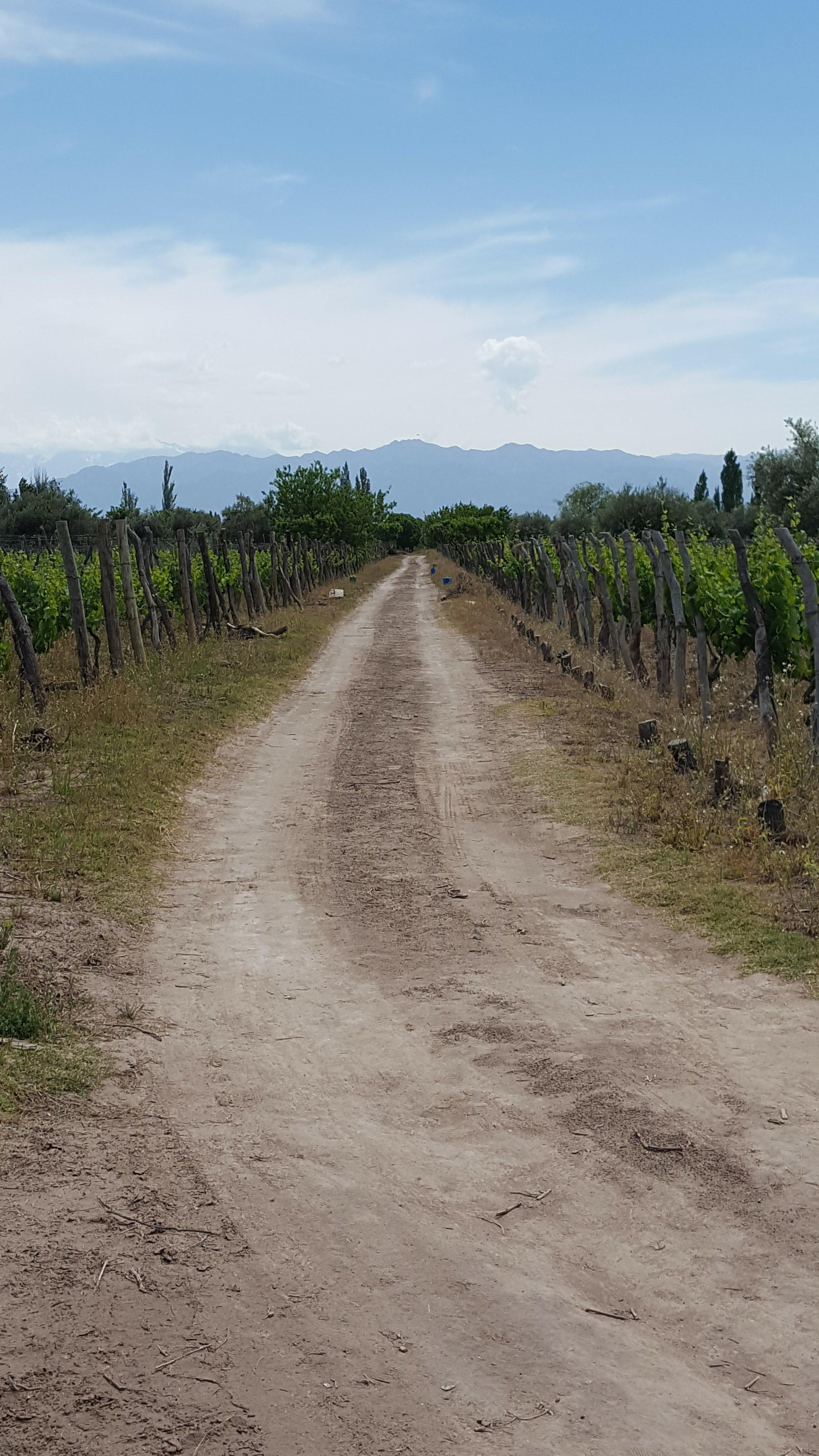 IBB_Travelling_SA_Mendoza_