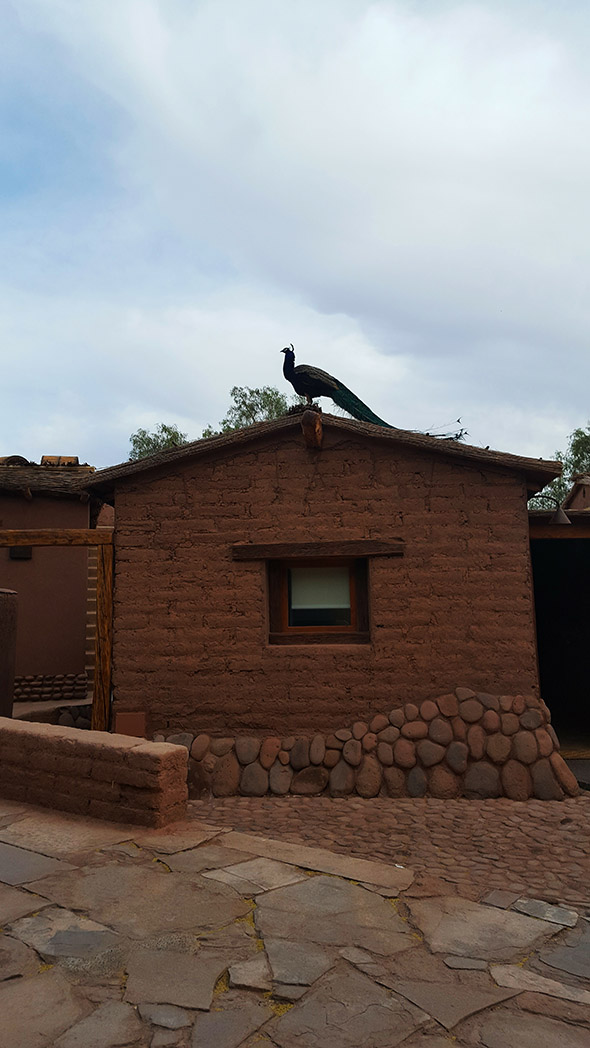Our hotel, complete with unconventional alarm bird