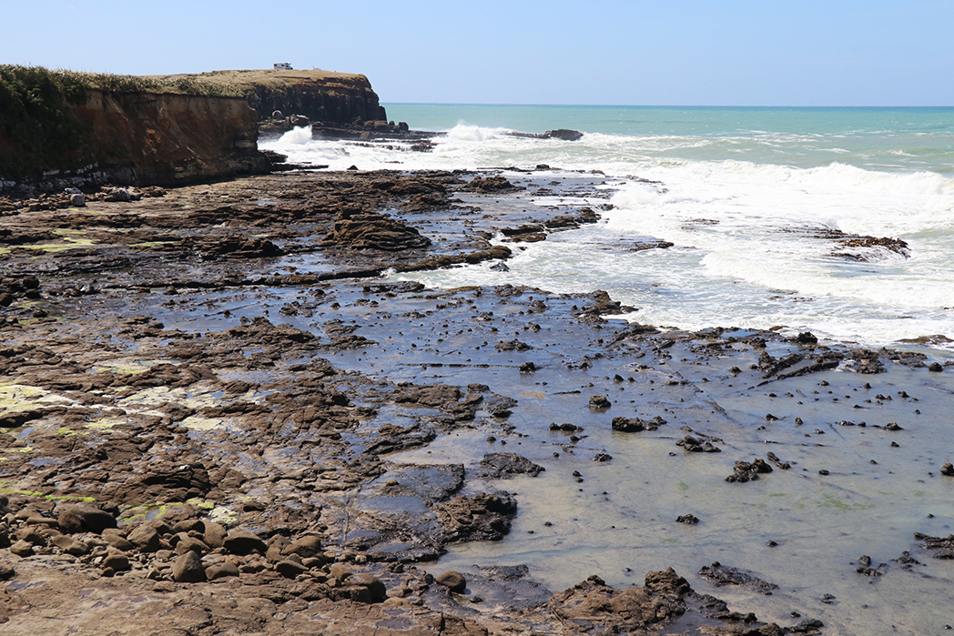 The petrified forest of Curio Bay