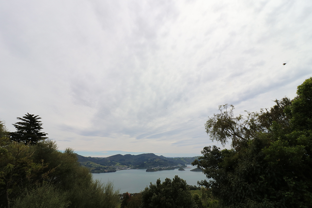 Otago Bay