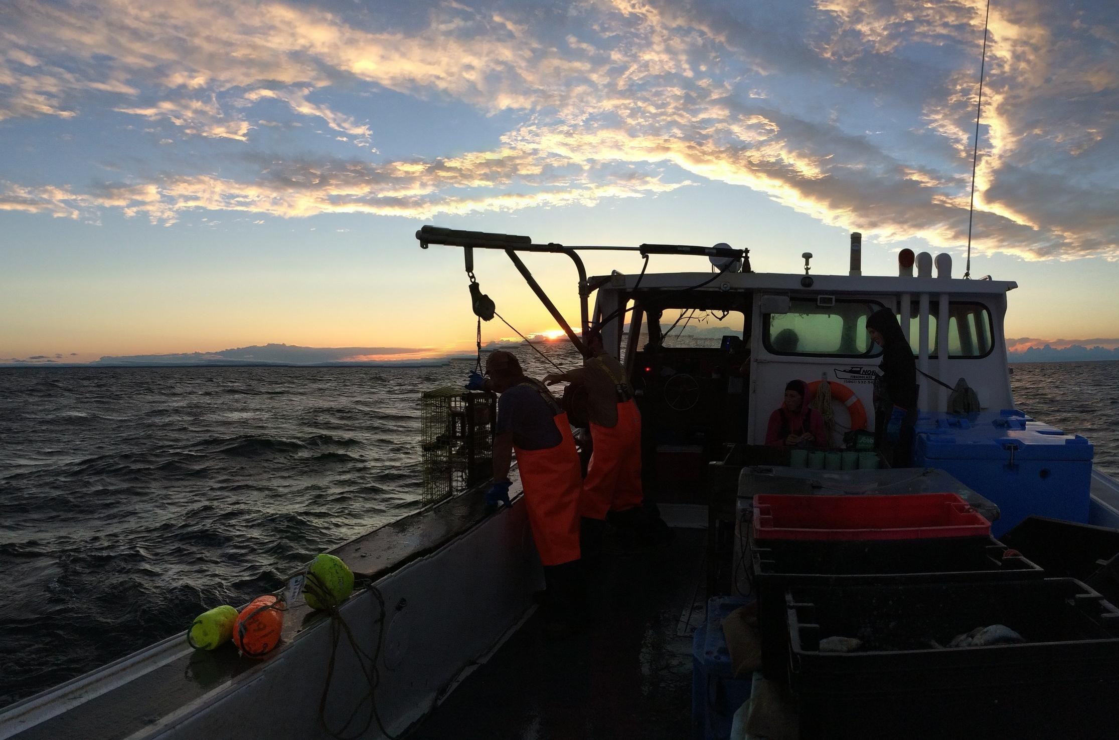 Développement d'appâts alternatifs pour la pêche au homard