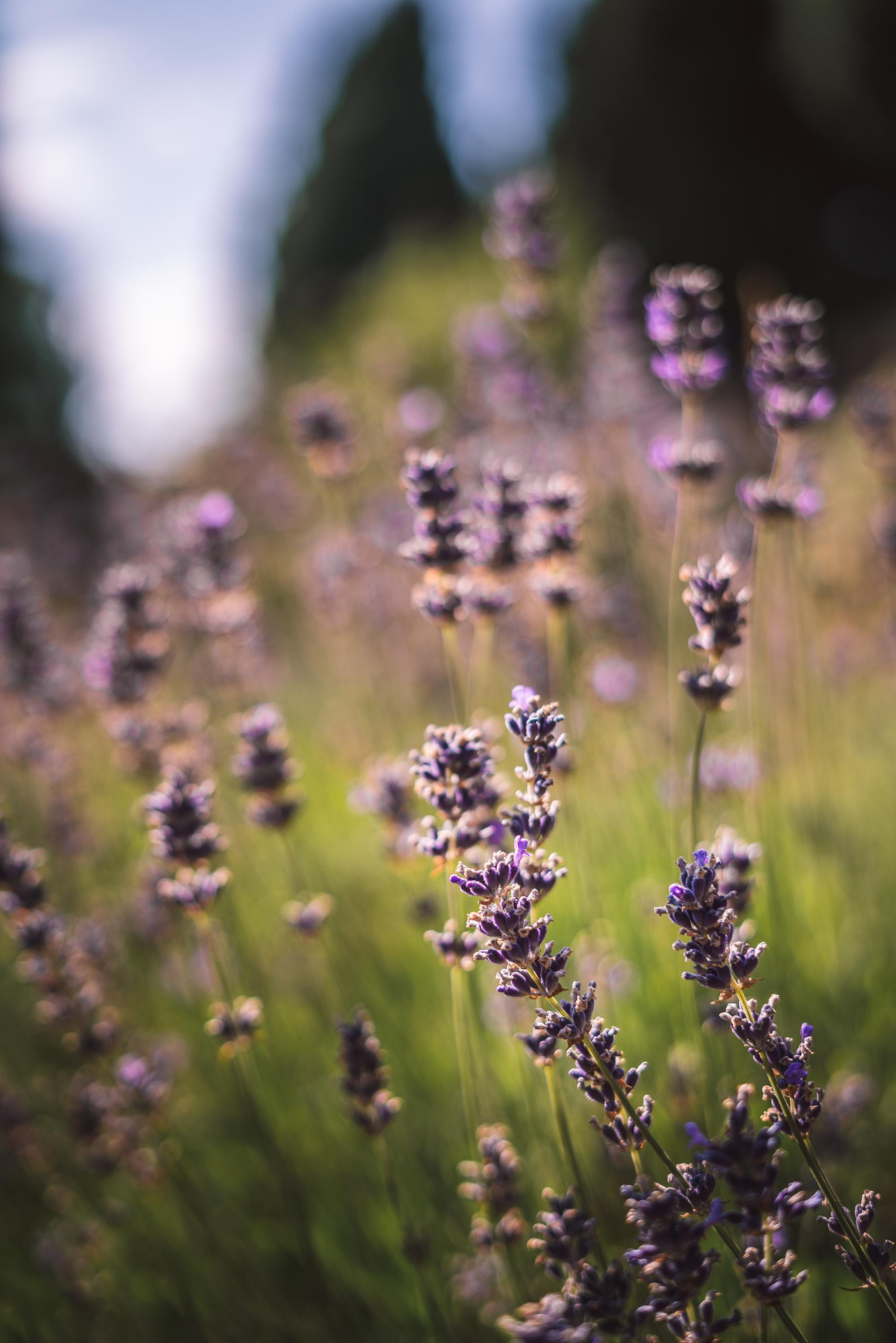 72 Summer Bloom 2.0.jpg