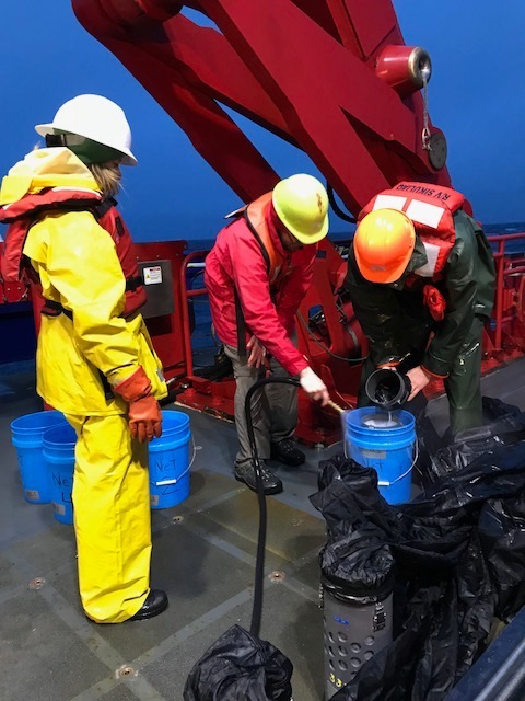 Pouring the net contents into buckets for the wet lab and specimen sorting