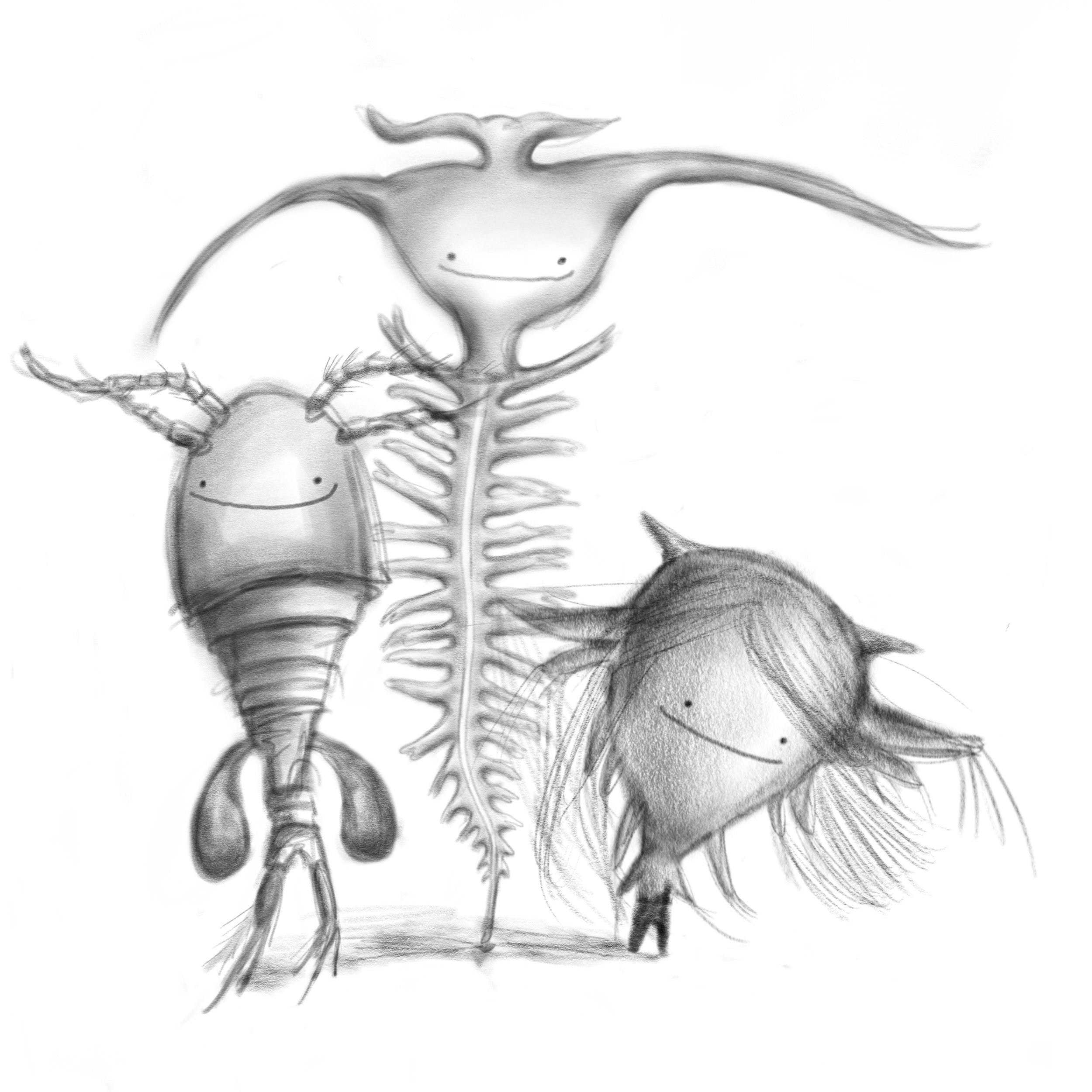 3 Zooplankton  - copepod, tomopteris and barnacle nauplius