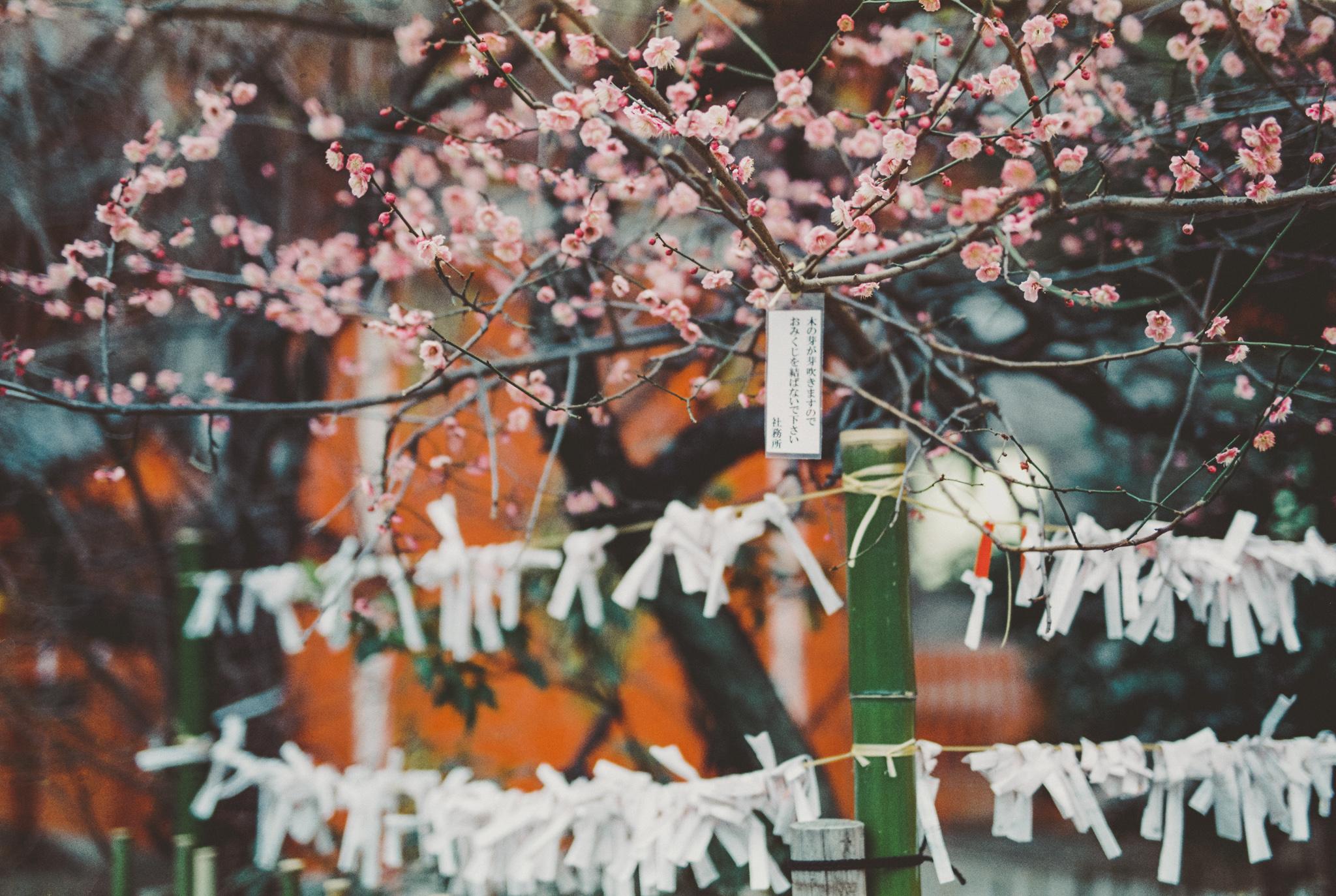 travel-photographer-tokyo-2.jpg