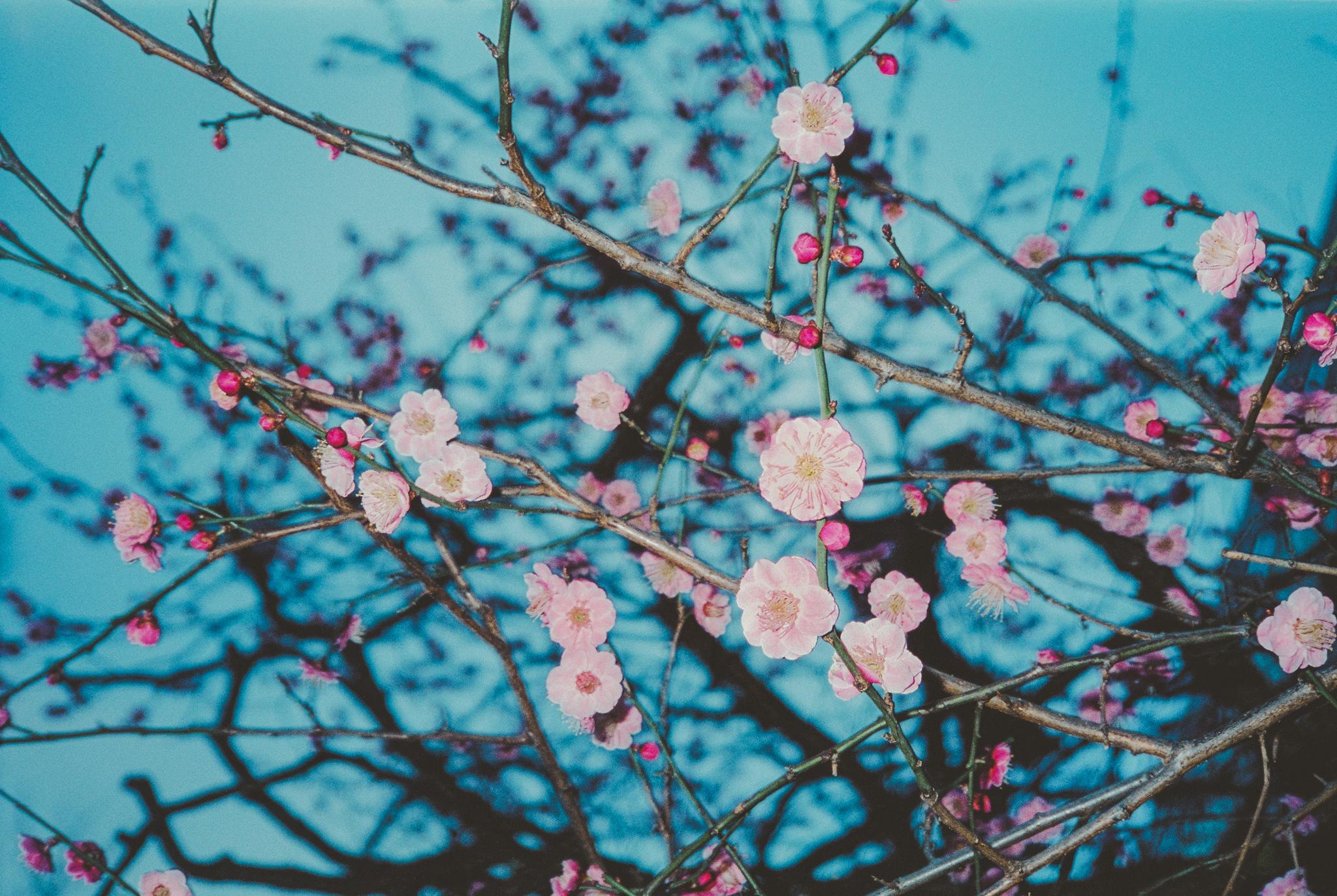travel-photographer-tokyo-18.jpg