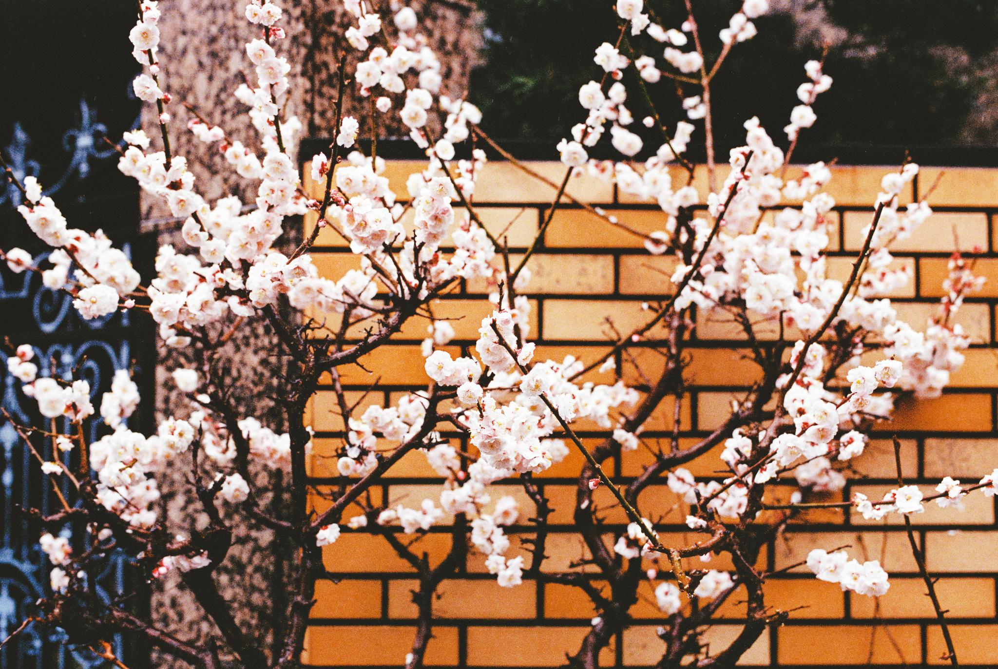 travel-photographer-tokyo-64.jpg