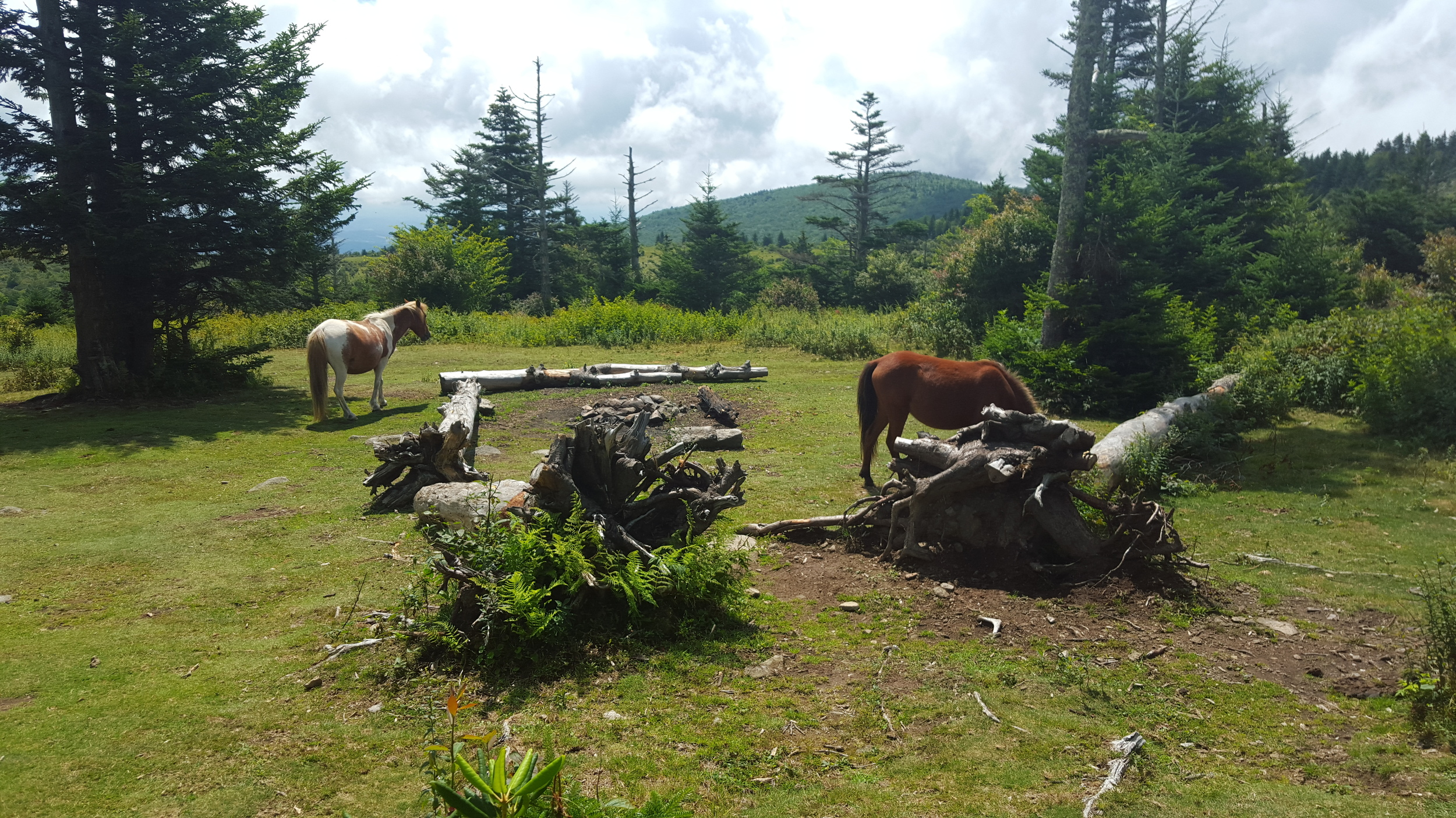 Ponies roam free in Grayson Highlands State Park