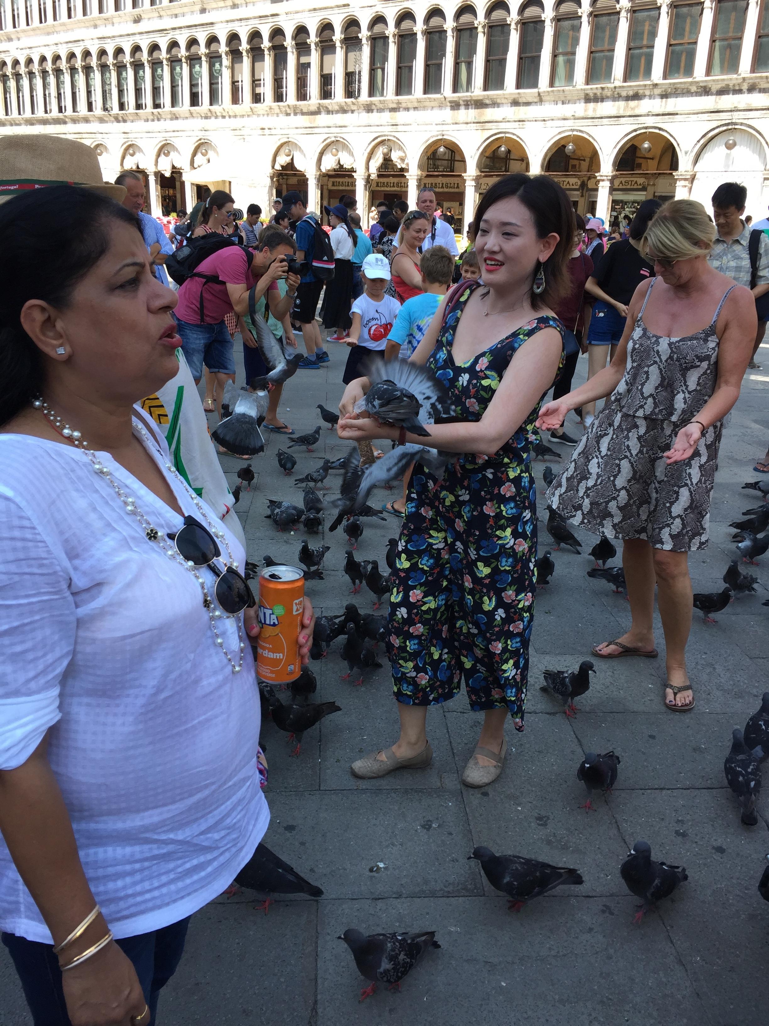 pigeon feeding
