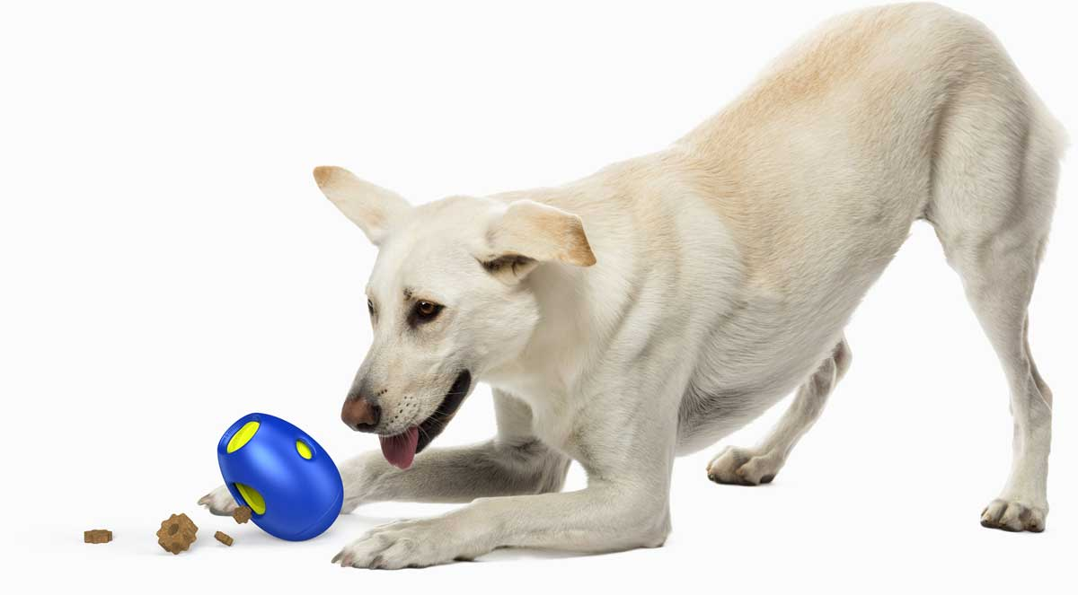 It's time for tikr treats! Tikr by SBARK is an activity toy for dogs that will keep them entertained and satisfied.