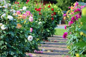 gloriasflowers.jpeg