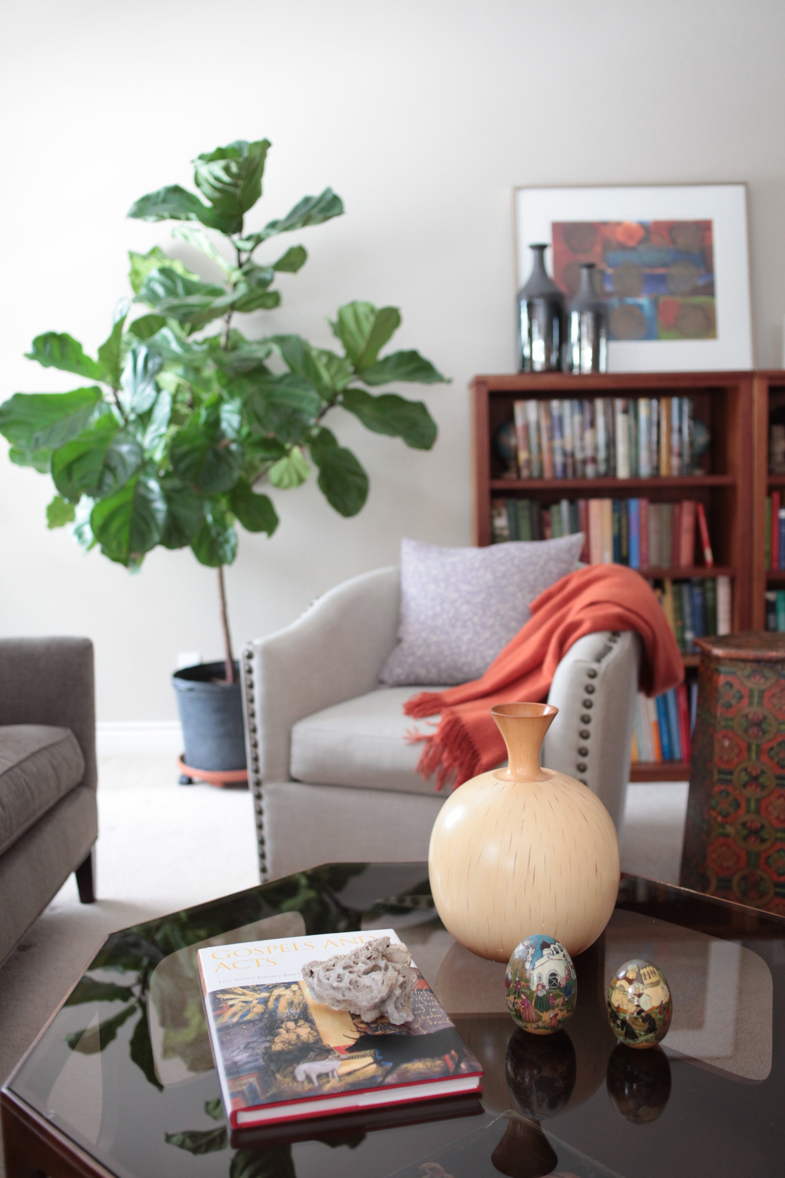 Glass coffee table with fig tree.JPG